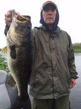 Client with his trophy fish caught on the St. Johns River system with Bass Challenger Guide service